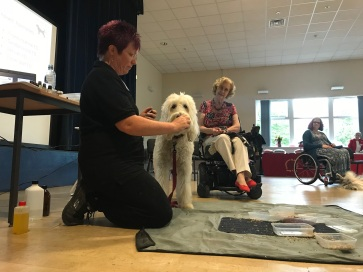 Dog aid workshop - Elsa
