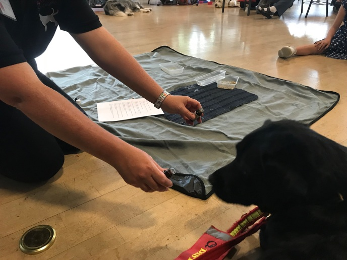 Dog aid workshop - tilly