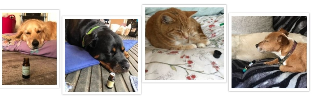 pets selecting essential oils